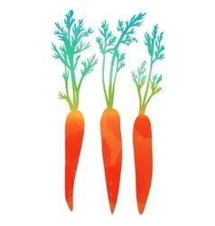 carrots isolated on white background vector image