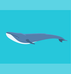 whale north surface deep vector image
