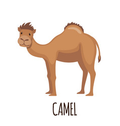 Cute camel in flat style vector
