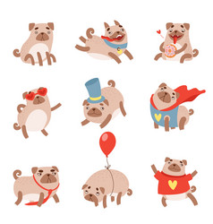 funny pug dog set cute pet animal character in vector image