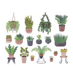 Home plants in flower pots vector