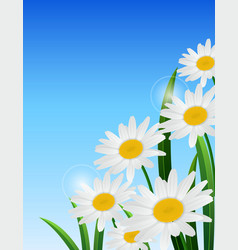 nature spring daisy flower on blue sky background vector image