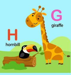 isolated alphabet letter g-giraffe h-hornbill vector image vector image