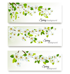 three spring nature banners with blossom of vector image vector image