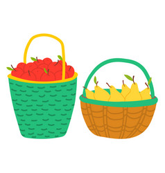 fruits in basket apple and pear harvest vector image
