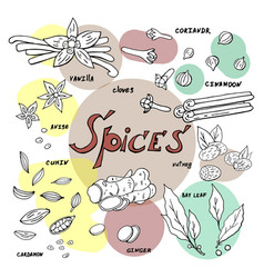 hand drawn spices on white background doodle vector image