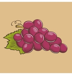 Grapes in vintage style Colored vector image vector image