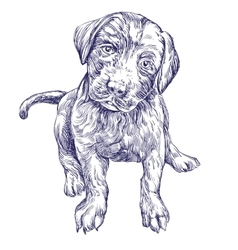dog puppy hand drawn llustration realistic vector image vector image