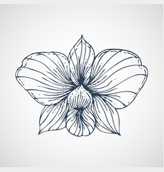 orchid hand drawn vector image