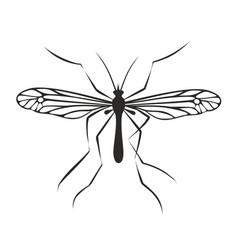 Drawing of mosquito vector