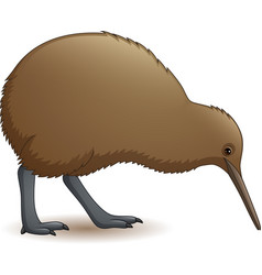 Cartoon funny kiwi bird vector