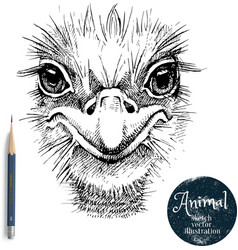 hand drawn ostrich bird head sketch isolated vector image