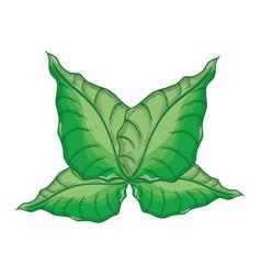 Green nice plants decoration botany vector