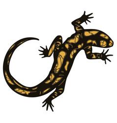 lizard - fiery salamander vector image