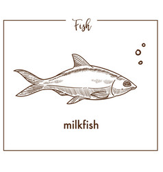 milkfish sketch fish icon of chanos vector image