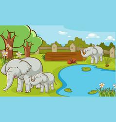 Scene with elephants at zoo vector