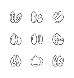 set line icons of nuts vector image