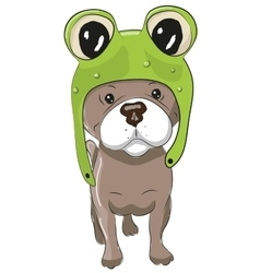 Dog in froggy hat vector image