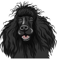 black dog Poodle breed smiles vector image vector image