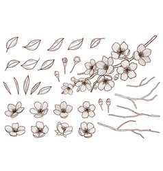 Almond blossoms hand drawn set spring flowers vector