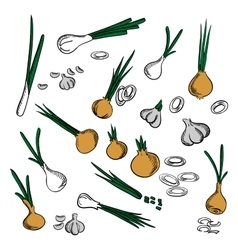 Fresh onion leek and garlic vegetables vector