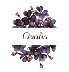 hand drawn design with oxalis highly detailed vector image