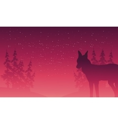Silhouette of wolf and spruce vector image