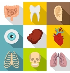 Internal organs icons set flat style vector image vector image