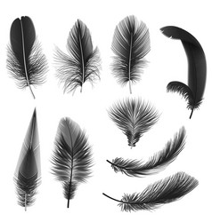 black realistic feathers isolated on white vector image