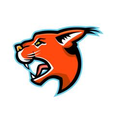 caracal head side mascot vector image