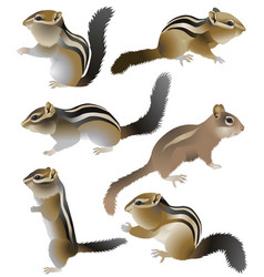 Collection of chipmunks in colour image vector