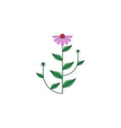 medicinal herb icon vector image