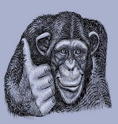 Chimpanzee drawing vector image vector image