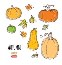 autumn harvest template vector image