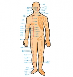 Chinese acupuncture scheme vector