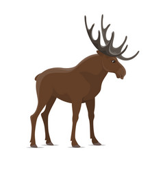 Elk moose wild animal isolated icon vector