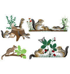 Family of chipmunks outdoors in colour image vector
