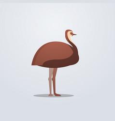 ostrich icon cute cartoon wild animal symbol vector image