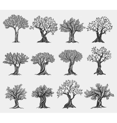 Olive oil trees logo isolated agriculture icons vector image