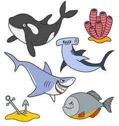 Marine predatory fish vector image