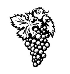Bunch grapes in engraving style isolated on vector