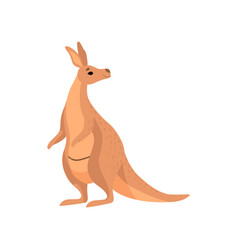 Kangaroo brown wallaby australian animal vector