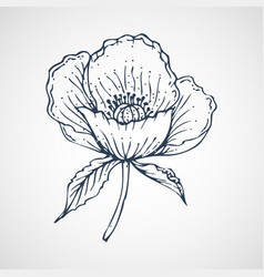 Poppies hand drawn vector