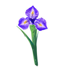 vintage beautiful iris hand drawing vector image
