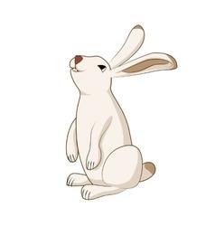 Rabbit cute hare bunny isolated vector