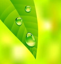 leaf drops vector image vector image