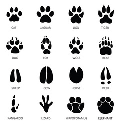 Wolf Paw Vector Images Over 800