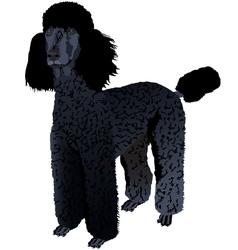 Black poodle vector