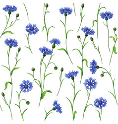 Cornflower pattern vector
