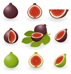 figs vector image vector image